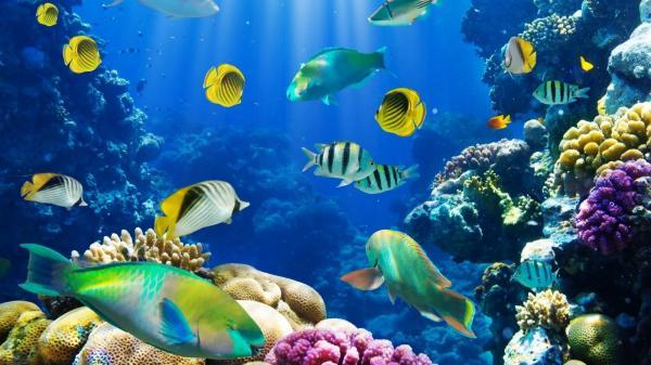 ¿Qué peces se pueden juntar en una pecera? - Animalear