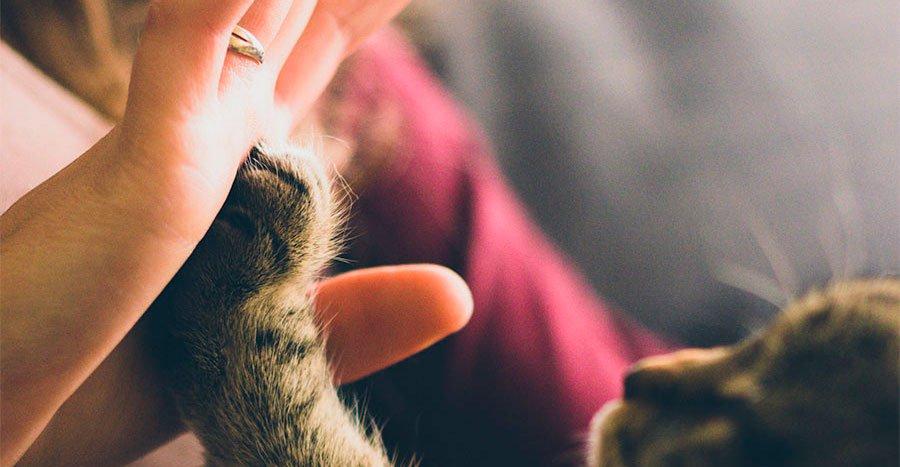 Día-de-San-Valentin-con-tu-mascota