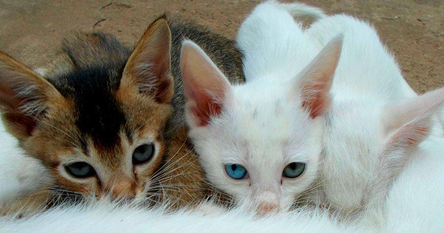 un-gato-llega-a-casa-animalear