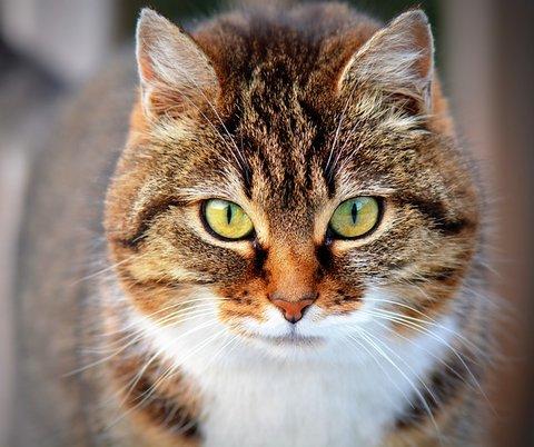 Etiquetado comida para gatos
