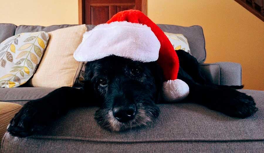 Viajar con tu mascota en Navidad