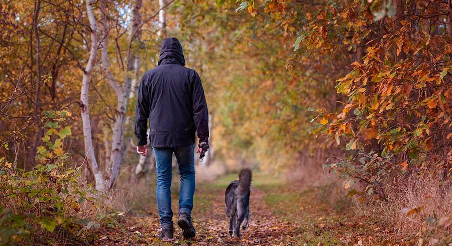 Los beneficios de pasear con tu mascota