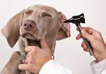 Higiene auricular