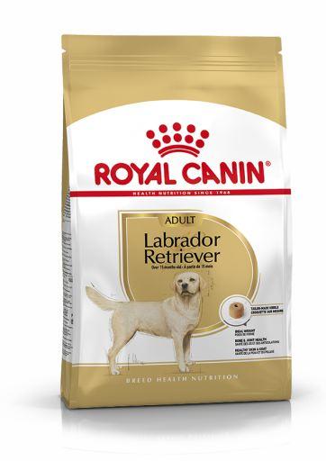 Labrador Retriever Adult Pienso para Perro Adulto de Raza
