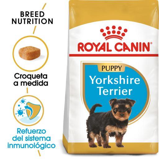 Yorkshire Terrier Puppy Pienso para Cachorro de Raza